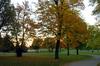 Treespath
